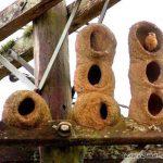 معماران چیره دست حیوانات