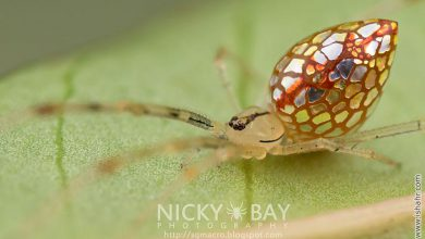 Photo of عنکوبت تزیینی آینه ای