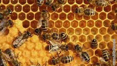 Photo of الگوهای تجاری زنبورها