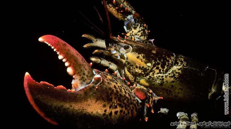 جاندارانی که تا ابد زنده اند!