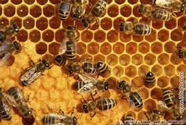الگوهای تجاری زنبورها